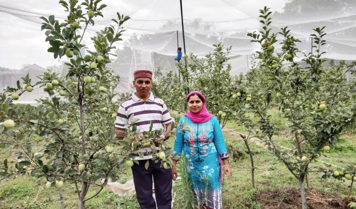 धान, गेहूं, मक्की की खेती करते-करते पूर्ण चंद ने Shahpur में तैयार किया Organic Apple