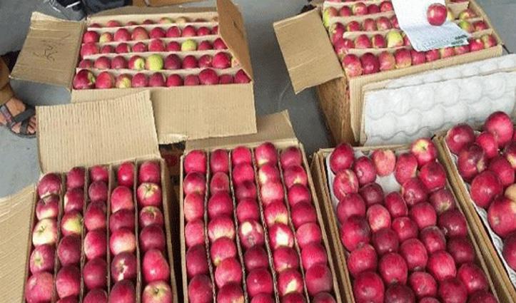सेब बागवानों को दिक्कत ना आए इसके लिए Government ने किया कुछ ऐसा, पढ़ें ये रपट