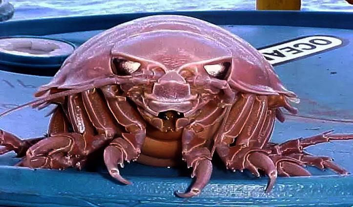 हिंद महासागर में दिखा 14 पैर वाला Cockroach, फोटो देखकर आप भी हो जाएंगे हैरान