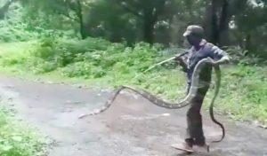 कोयम्बटूर में Rescue किया 15 फीट लंबा King Cobra, फोटो हो रही खूब वायरल