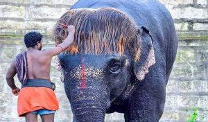 देखिए हथिनी का कमाल Hairstyle, सोशल मीडिया पर कर रहा Trend