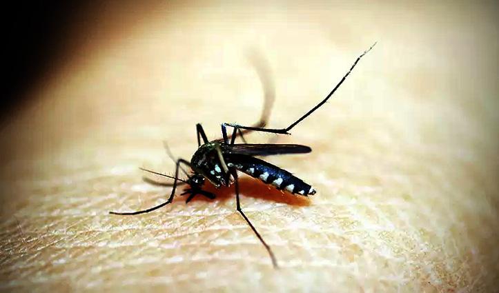 तो इसलिए इंसान का खून पीते हैं मच्छर, वजह जानकर आप भी हो जाएंगे हैरान