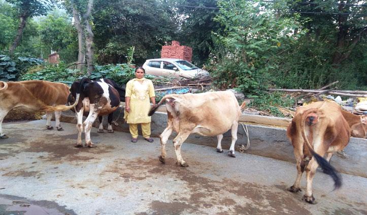 हौंसलों को मिली उड़ानः Dairy farming ने बदल डाली सुषमा की तकदीर