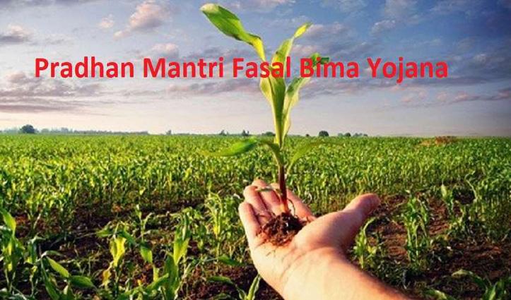किसान 15 जुलाई तक करवा सकते हैं धान और मक्की की फसल का बीमा