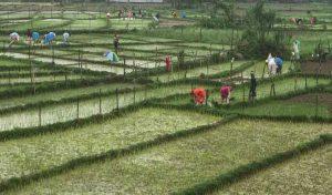 झमाझम बारिशः गर्मी से राहत, किसान खुश ....यहां देखें तस्वीरें