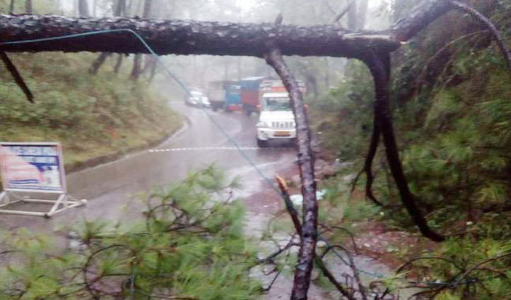 Pathankot-Mandi NH पर भूस्खलन : चेक पोस्ट पर गिरा पेड़, तीन घंटे बंद रहा मार्ग