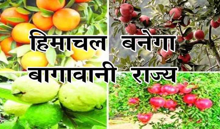 Himachal बनेगा बागवानी राज्य, खर्च होंगे 100 करोड़, 170 हेक्टेयर क्षेत्र में लगाए जाएंगे फलदार पौधे