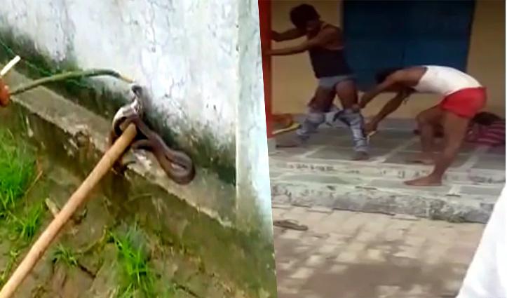 Video: जींस में घुसकर बैठा रहा जहरीला Cobra; खंभा पकड़कर 7 घंटे तक उसी हालत में खड़ा रहा शख्स