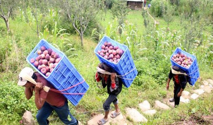 Apple Season के दौरान बागवानों को एक क्लिक पर उपलब्ध होंगे मजदूर , जानें कैसे