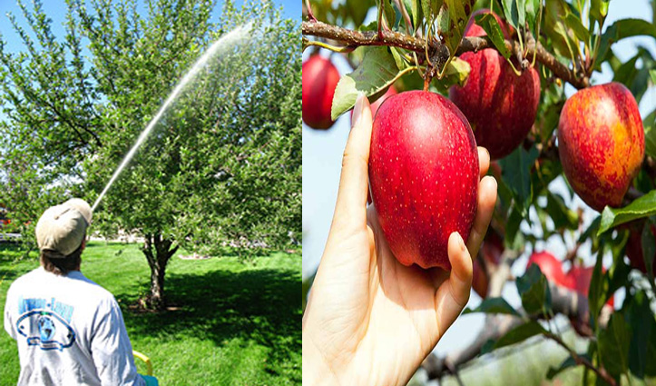मुनाफे के चक्कर में लोगों की सेहत और सेब से खिलवाड़, हिमाचल में Ban होगी कलरफुल स्प्रे