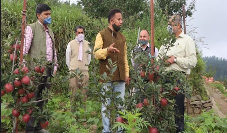 प्रधान सचिव कृषि Onkar Sharma ने प्राकृतिक खेती विधि से उगाए सेब बागीचे का किया निरीक्षण