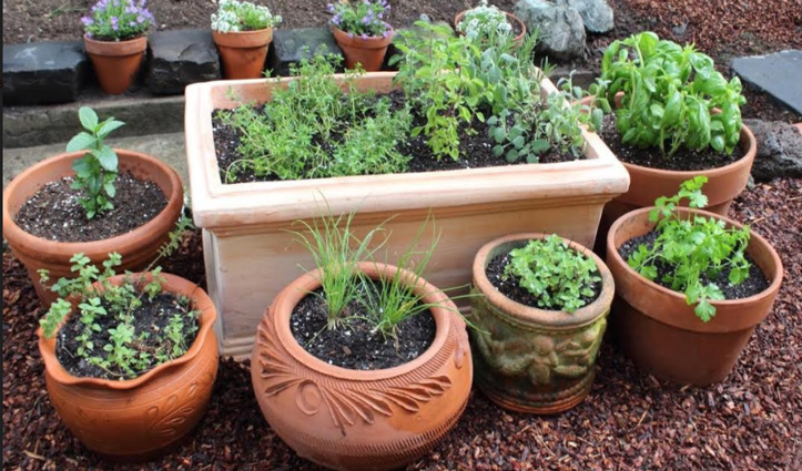 घर में लगाएंगे ये पौधे तो बढ़ेगी Fungal, Bacterial व Viral रोगों से लड़ने की क्षमता