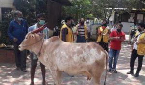 Bengaluru शहर में गैरमिलावटी दूध पीने के लिए छठी मंजिल पर पाली गाय, पुलिस ने हिरासत में लिया