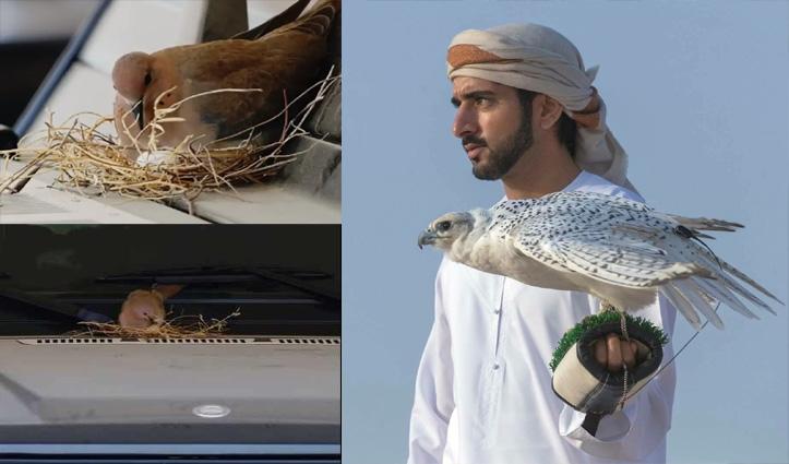 दुबई क्राउन प्रिंस की SUV पर चिड़िया ने घोंसला बना कर दिए अंडे; अब बच्चों के बड़े होने तक नहीं चलेगी गाड़ी