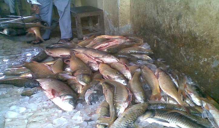 Fatehpur: आखेट पर हटा प्रतिबंध, 15 सहकारी सभाओं में पहुंची 60 क्विंटल मछली