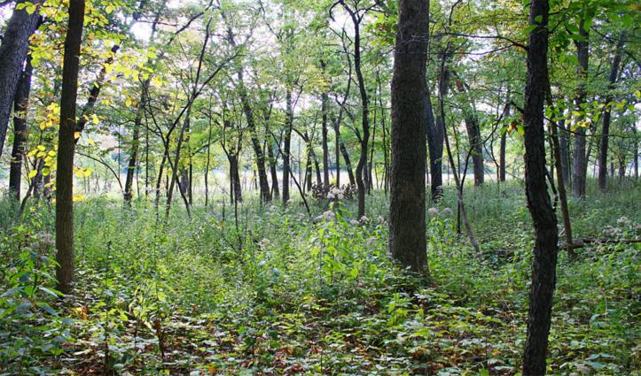 सोलन: BBN के प्रदूषण को कंट्रोल करेंगे छोटे वन, कसंबोवाल से शुरू हुई लघु वन योजना