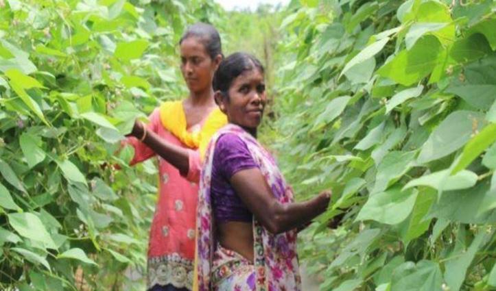 मजदूरी करती थी मां-बेटी, नई तरह की खेती अपनाकर बन गईं लखपति