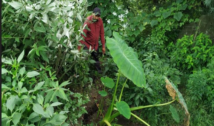 Solan के इस गांव के खेतों में पड़ी बड़ी-बड़ी दरारें, खौफ में ग्रामीण- घरों को भी खतरा