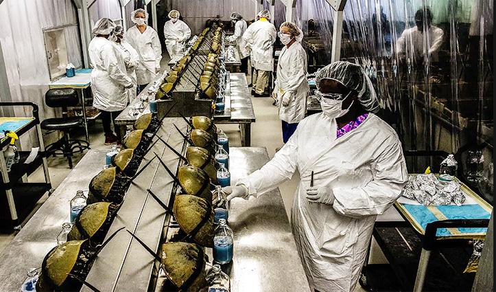 इस जीव के नीले खून से बनेगी Corona Vaccine, लाखों में है एक लीटर का दाम
