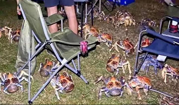Island में पिकनिक मना रहा था परिवार, तभी लुटेरे केकड़ों ने कर दिया हमला, देखिए Photos