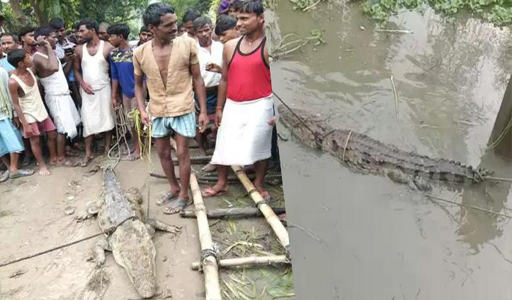 ग्रामीणों ने मगरमच्छ को बचाया, उसे छोड़ने के लिए वन विभाग से मांगे 50 हजार रुपए