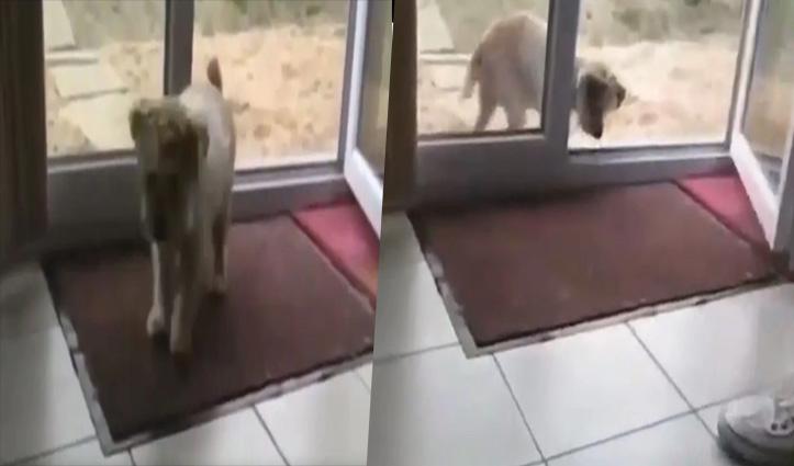 #Viral_Video : घर में घुसने से पहले Cute Puppy ने रगड़-रगड़ कर साफ किए पैर