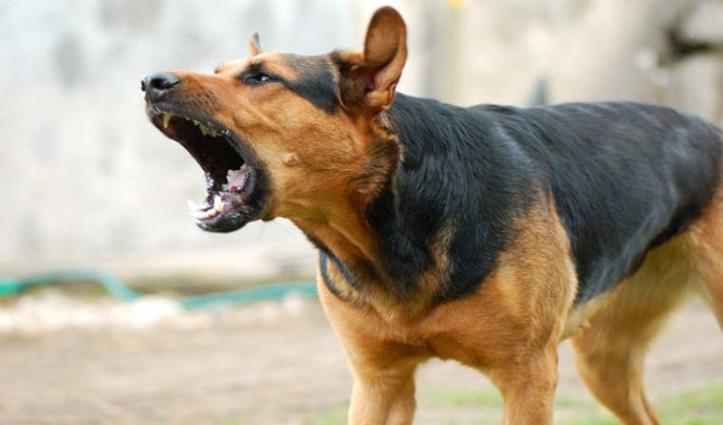 सनकी युवक ने कुत्ते को गोली मारकर उतार दिया मौत के घाट; बोला- बहुत भौंकता था…