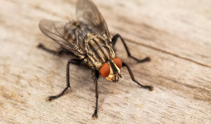 मक्खी मारने के चक्कर में शख्स ने अपना पूरा घर ही फूंक डाला; जानें कैसे लगी इतनी भीषण आग