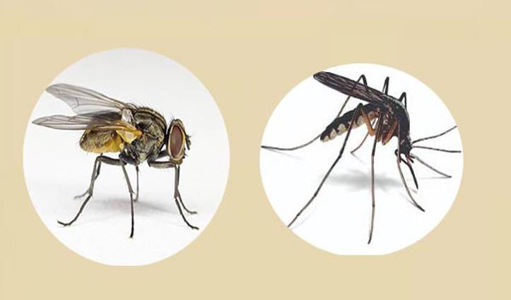 ये हैं दुनिया के 5 सबसे जानलेवा जीव: लिस्ट में शामिल है मक्खी और मच्छर का भी नाम, जानें