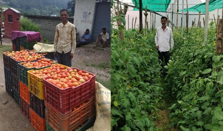 लाल सोने की खेती से मालामाल हुए Mandi के किसान, जाइका ने बदली तकदीर