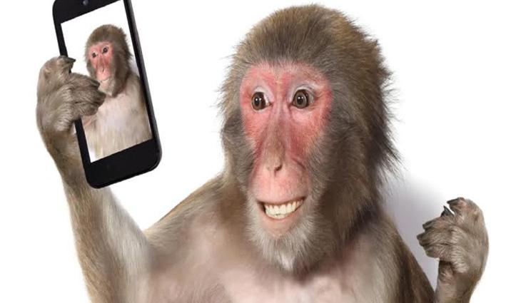 सोते हुए आदमी का Phone ले गया बंदर, खूब खींची Selfie, देखिए मजेदार Video