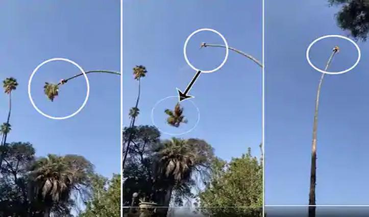 पेड़ पर बैठकर आदमी के पेड़ काटने का #Video_Viral; कटने के बाद हुआ ये अंजाम