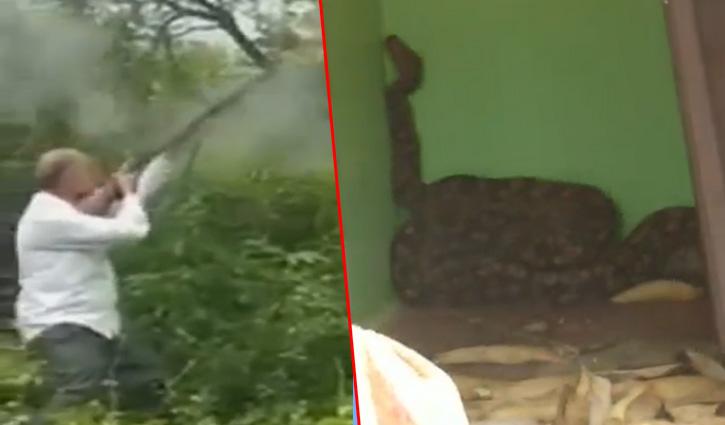 Hamirpur: दो अजगरों को गोली मारने के वीडियो वायरल: वन विभाग ने दर्ज करवाई FIR