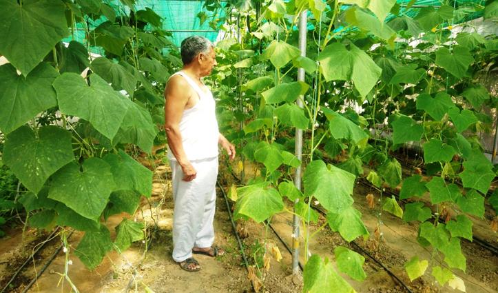 पहले बाहर से मंगवाते थे किसान अनाज, अब पांच गुणा बढ़ गई अन्न की पैदावार