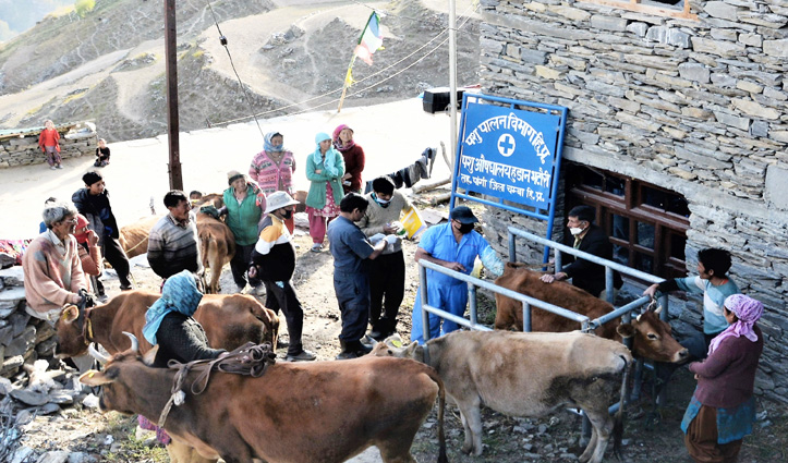 CSKHPAU Veterinary Scientists organize animal infertility treatment camps in Pangi