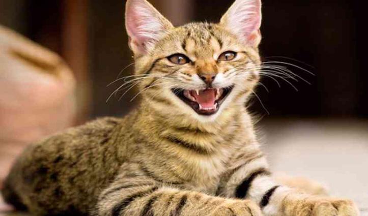 कपल ने पांच लाख देकर Online मंगवाई बिल्ली, तीन महीने बाद पता चली जानवर की हकीकत
