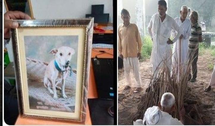 सीवर से बचाई थी Street Dog की जान, मौत पर मालिक ने निकाली शवयात्रा, तेरहवीं भी की