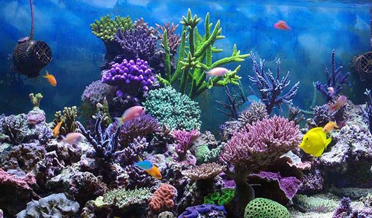 धर्मशाला में बनेगा 3G Mega Aquarium,समुद्र के अंदर के नजारे का होगा एहसास