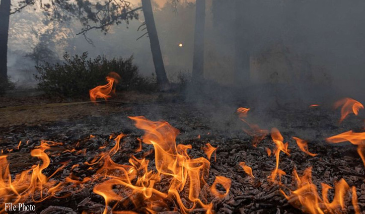 #Shimla: चौपाल में आग का तांडव, एक हजार सेब के पौधे झुलसे, दर्जनों सूखे घास के ढेर राख