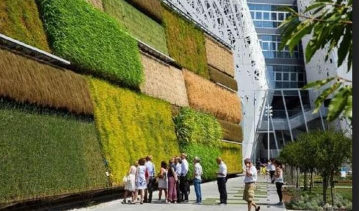 इस देश में जमीन पर नहीं दीवारों पर की जाती है खेती, धान-गेहूं ही नहीं उगती हैं सब्जियां