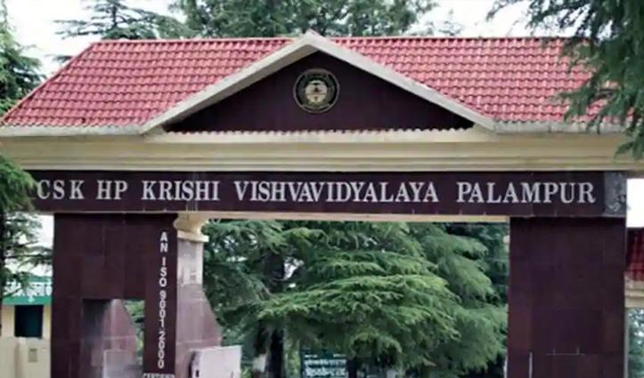 Jobs: कृषि विश्वविद्यालय Palampur में भरे जाएंगे 72 पद, पढ़ें कब तक करना है आवेदन