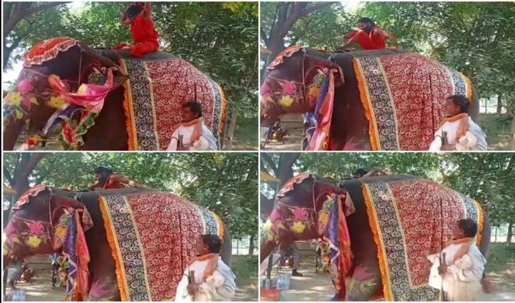 हाथी पर बैठे योग कर रहे थे बाबा रामदेव: नीचे गिरे 'धड़ाम' से, #Video देखें