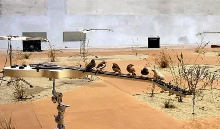 देखिए तो जरा, यहां 70 चिड़ियों ने बजाया गिटार: सोशल मीडिया पर खूब #Viral हो रहा वीडियो
