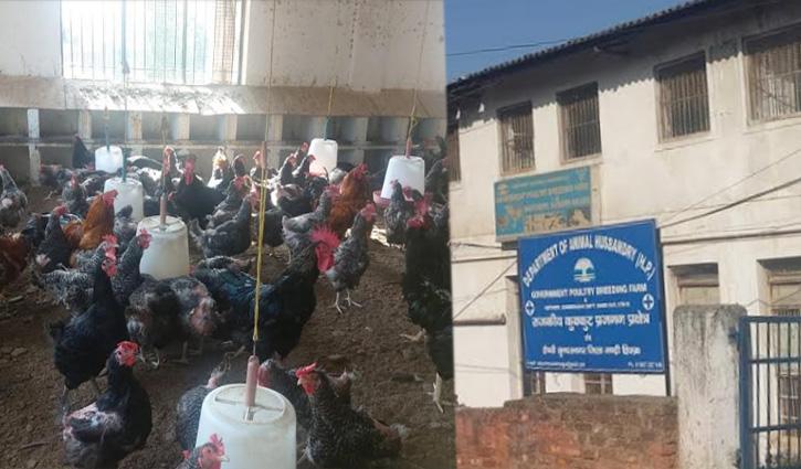 Sundernagar: पोल्ट्री फार्म लोगों के लिए बना सिरदर्द, हर समय फैली रहती है बदबू