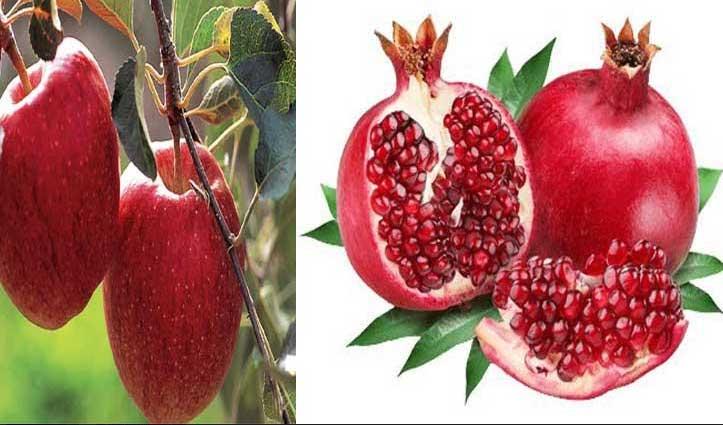 #Palampur कृषि विवि इस दिन से करेगा फलदार पौधों की बिक्री शुरू, ऐसे करें आवेदन
