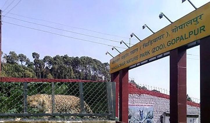 #Corona के बीच कल से खुलेगा गोपालपुर चिड़ियाघर, 9 माह बाद होंगे जानवरों और परिंदों के दीदार