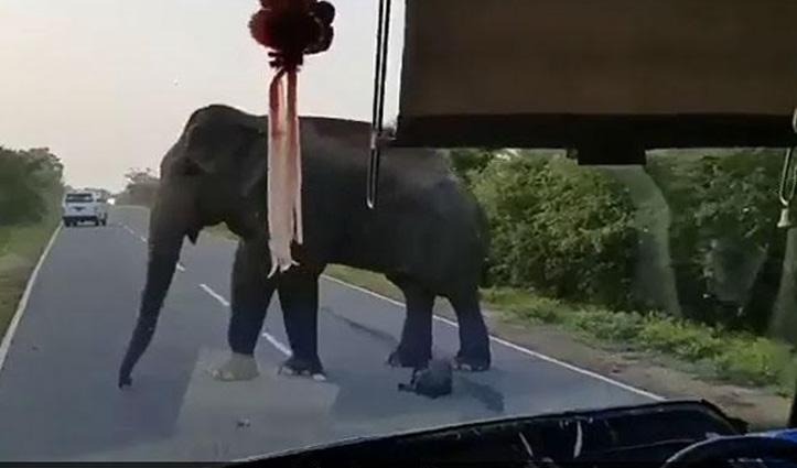 हाथी की दादागिरी, बस रुकवाकर ड्राइवर से छीन लिए केले, देखिए #Viral_Video