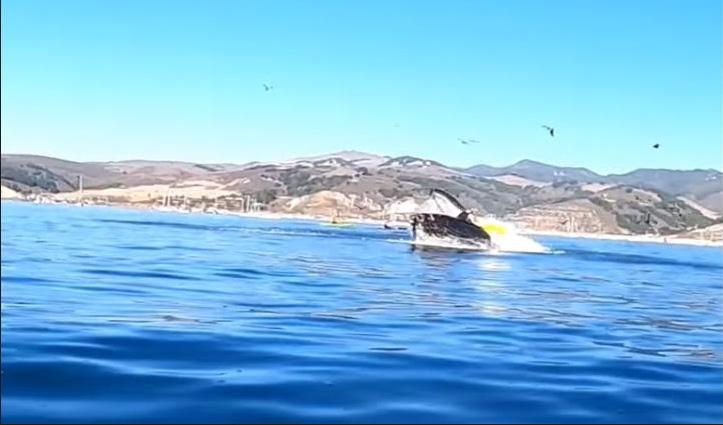 #ViralVideo : समुद्र में कयाकिंग कर रही थी दो सहेलियां, तभी नीचे से Whale ने कर दिया Attack