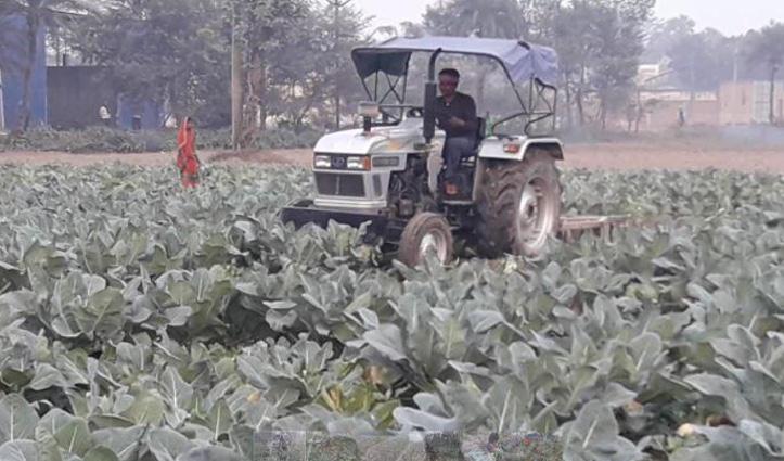 मंडी में एक रुपए किलो भी नहीं बिकी गोभी, #किसान ने Tractor चलाकर उजाड़ दी फसल