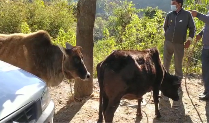 #Himachal: अब सड़कों पर नहीं दिखेंगे पशु, सोलन से शुरू हुआ बेसहारा पशु मुक्त हिमाचल अभियान